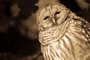 New Barred Owl Additions...
